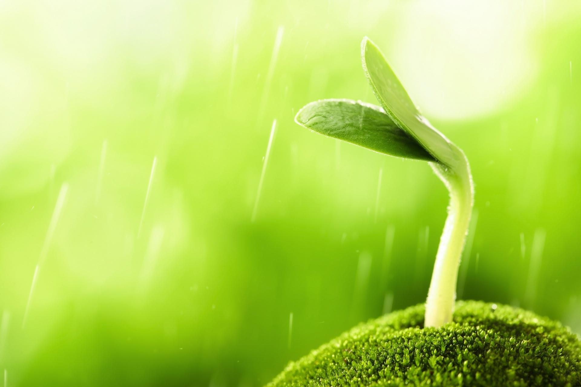 Hình nền đầy sức sống với những mầm xanh non vươn mình
