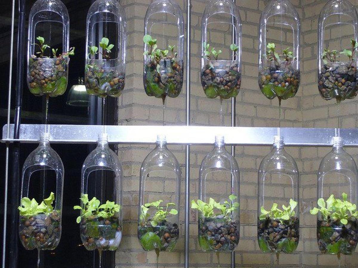 """7 cách """"chế biến"""" chai nhựa làm vườn rau tại nhà"""